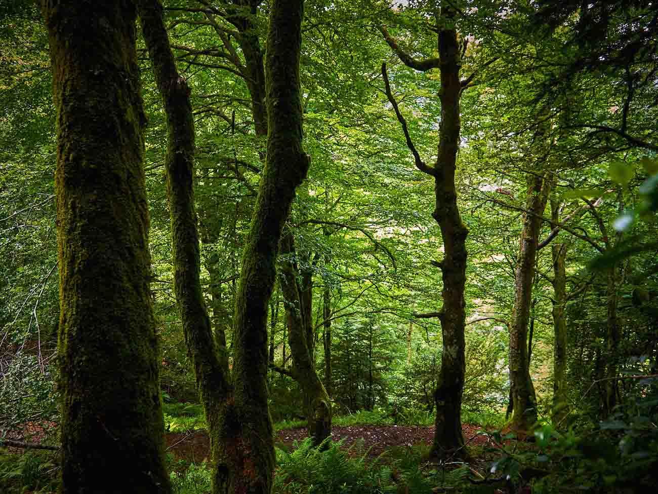 Sierra del Caurel en Galicia