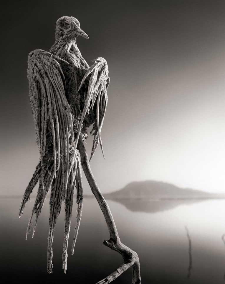 Ave petrificada en el lago Natrón