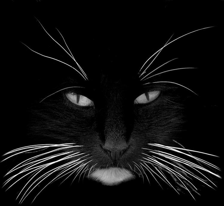 Los bigotes de los gatos