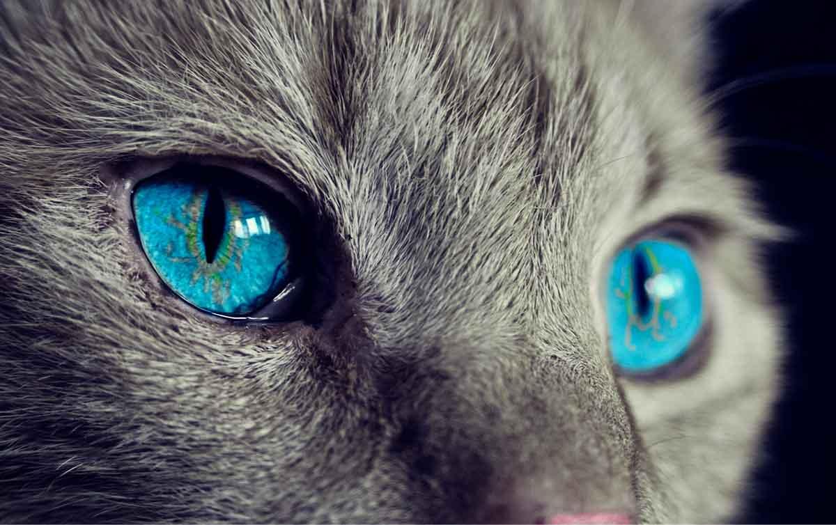 Los extraordinarios superpoderes de los gatos
