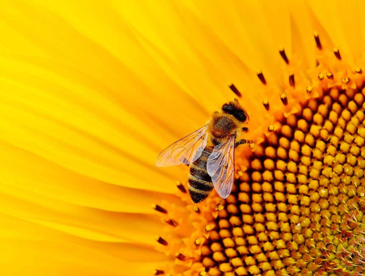 El papel de las abejas en el mundo y la importancia de la polinización