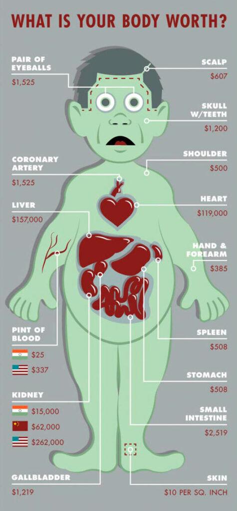Valor económico de diferentes órganos del cuerpo humano en el comercio ilegal