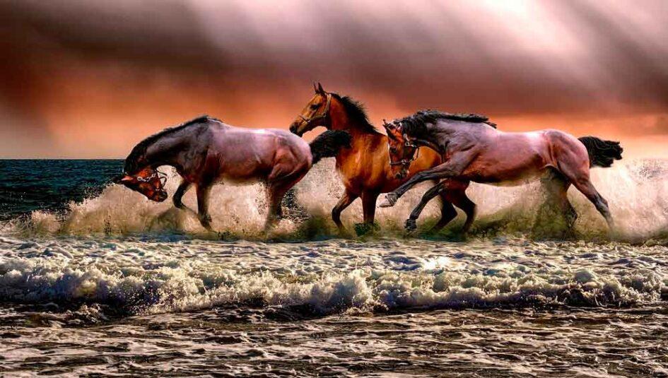De Bucéfalo a Babieca, los 5 caballos más famosos de la historia