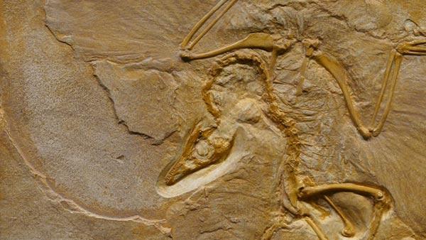 Fosil de una especie extinta