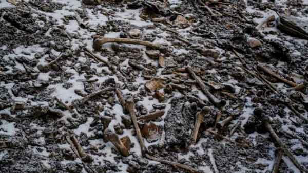 Imagen de algunos de los huesos encontrados en el lago