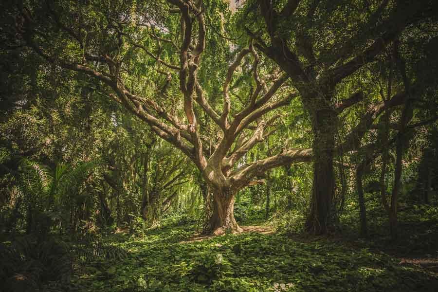 5 especies de árbol más curiosas y majestuosas del mundo