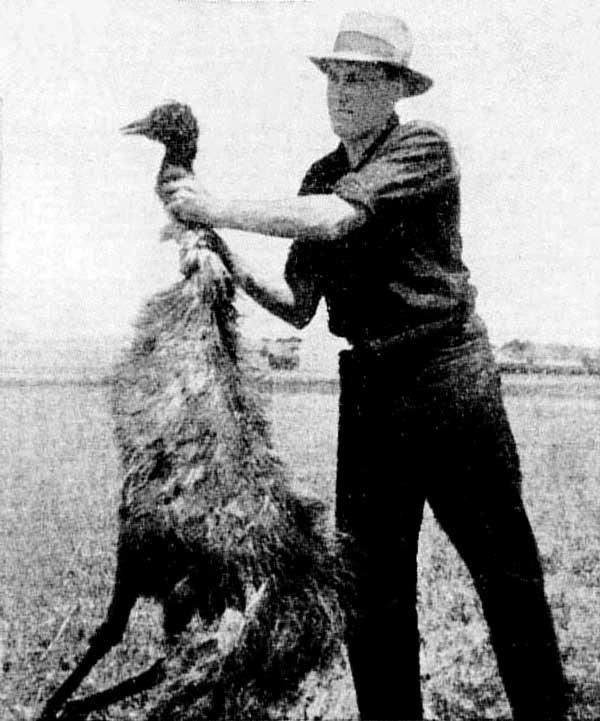 Agricultor australiano con uno de los emús abatidos