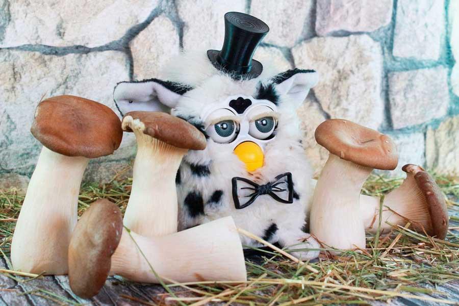 El boom del Furby y las descabelladas secuelas de su inteligencia