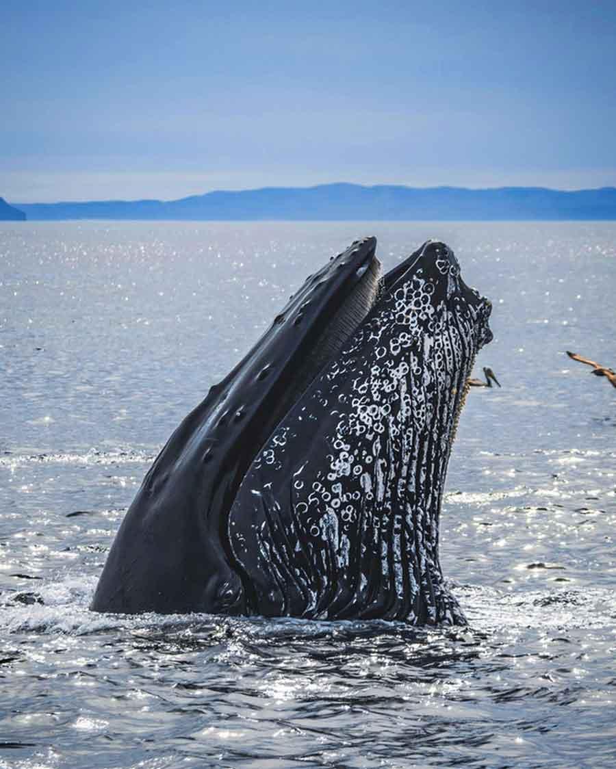 El insólito caso de Michael Packard, el pescador engullido por una ballena